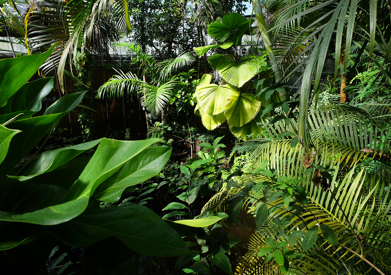 botanicus_jungle